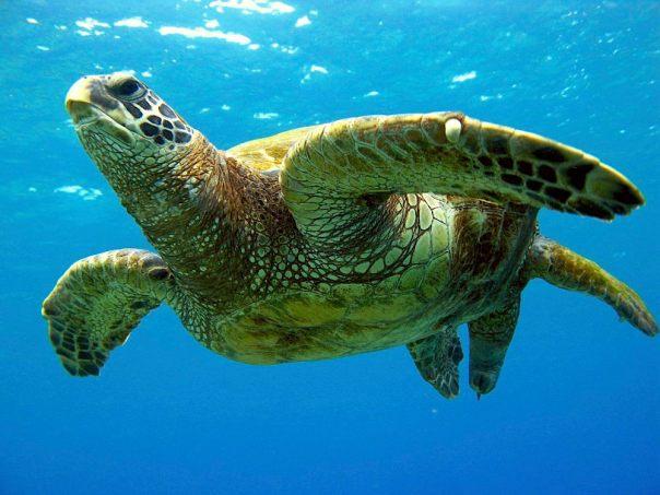 turtle, steve dunleavy